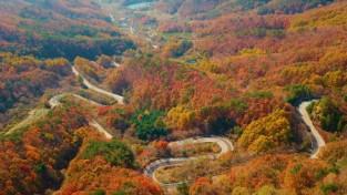 충북 영동군 도마령, 가을로 물들며 자태 뽐내