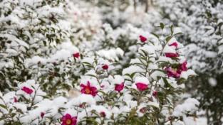 '겨울꽃 피는 섬' 사진 공모전 2020년 3월 31일까지 개최